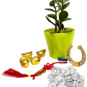 Planta banilor cu 10 amulete bani, 4 pepite si potcoava cu magnet, amuleta 3 monede si 24 banuti chinezesti
